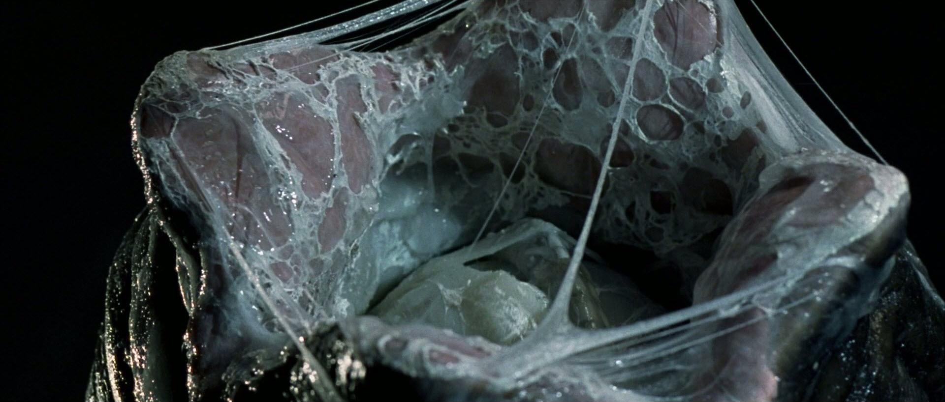 11. Film still from  Alien   Scott, Ridley, director.  Alien . 1979.