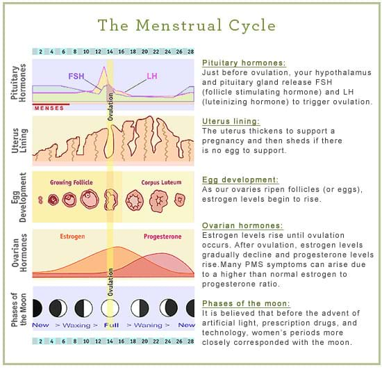 MenstrualCycle.jpg