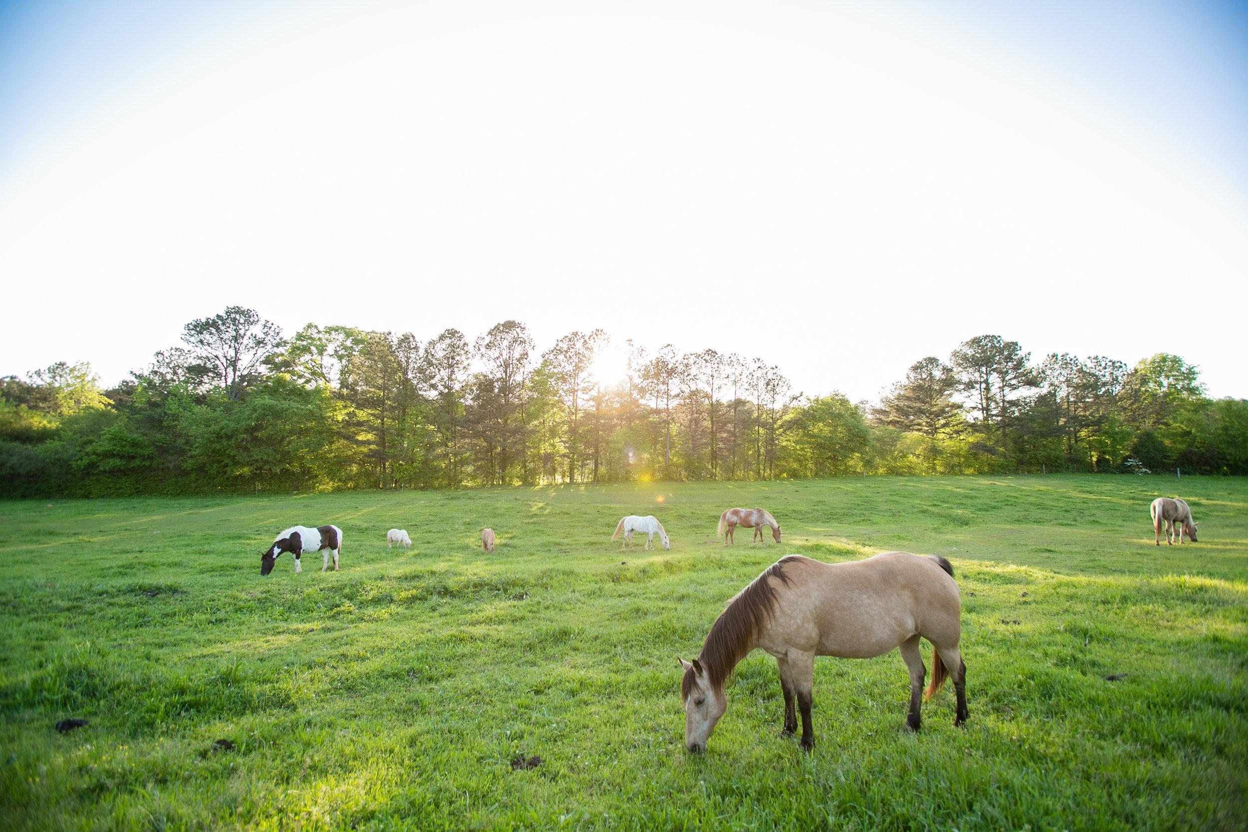 horses grazing pasture.jpg