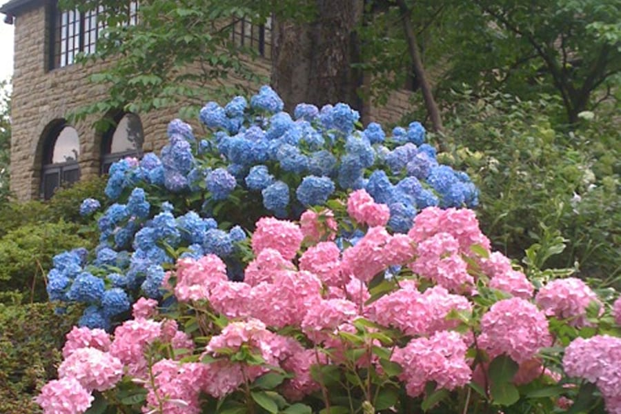 wsi-imageoptim-flowers.jpg