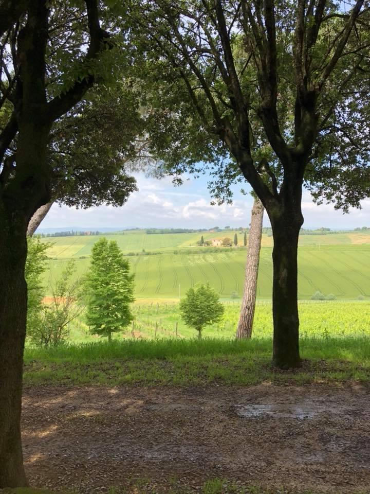 Avignonesi.jpg