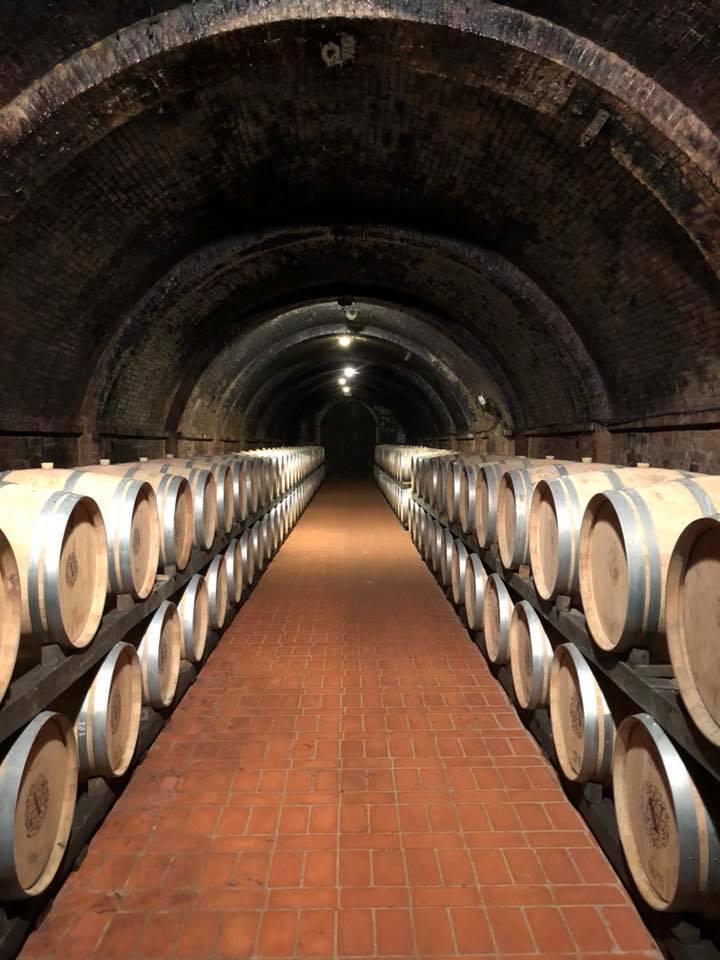 barrel room Avignonesi.jpg