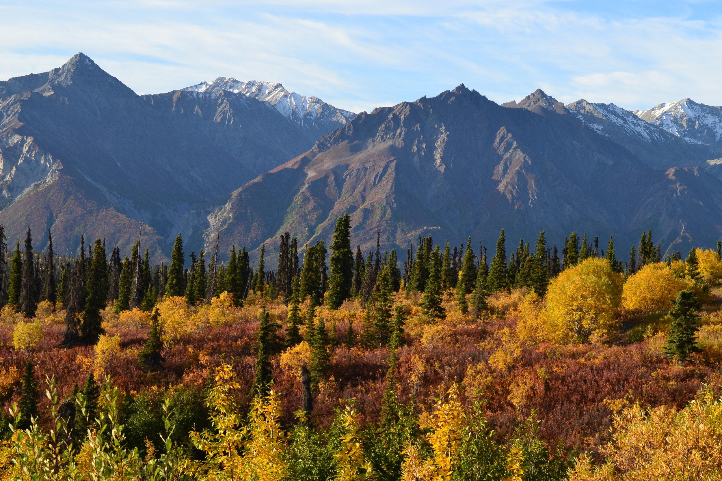 Fall foliage in the Wrangells