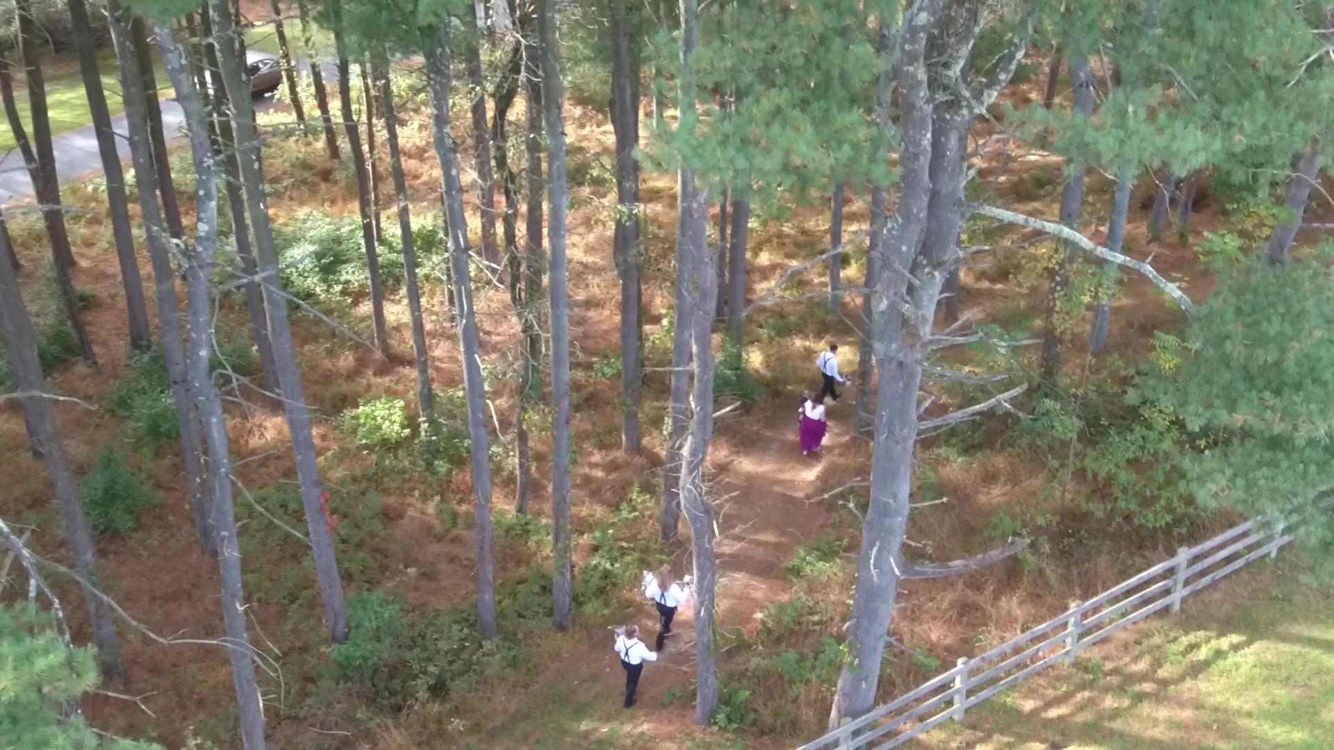 Bealer forest.jpg