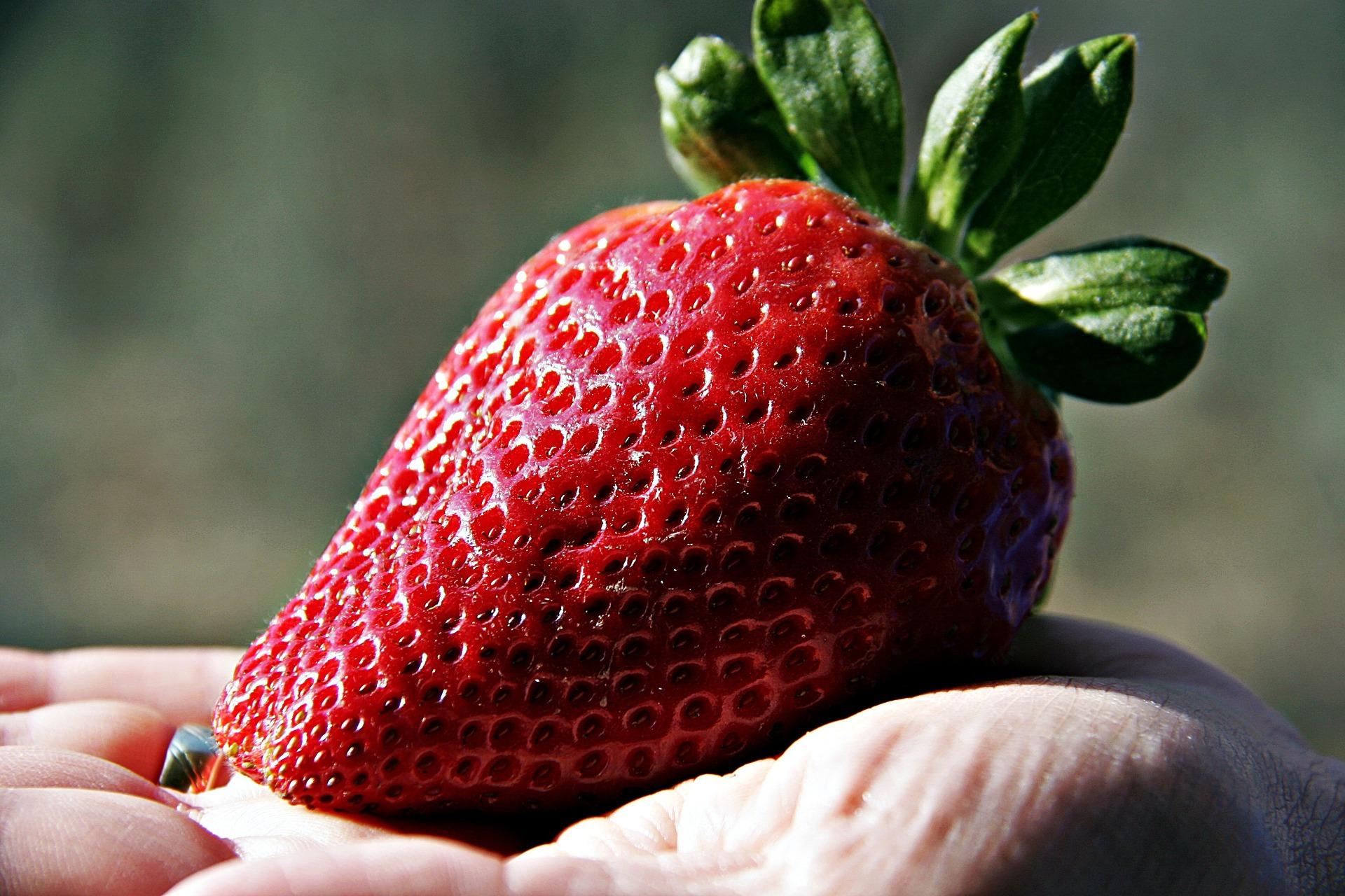 strawberry-1301245_1920.jpg