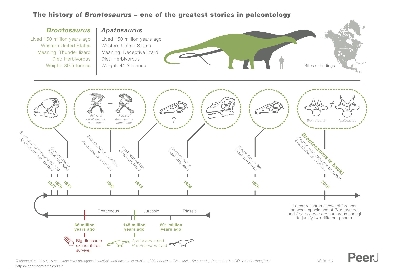 Brontosaurus_infographic.jpg