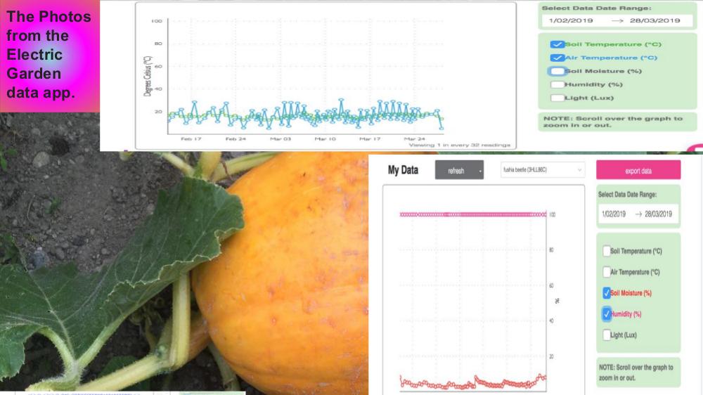 Whenua 1 Pumpkin Report.jpg