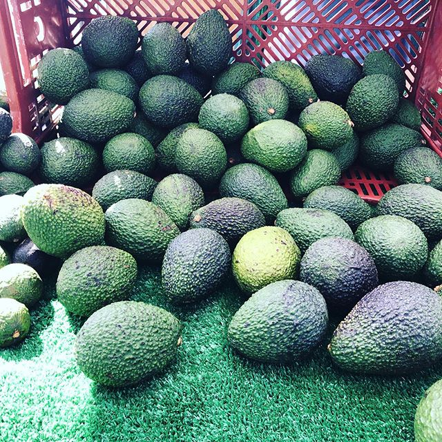 Just picked avocados.