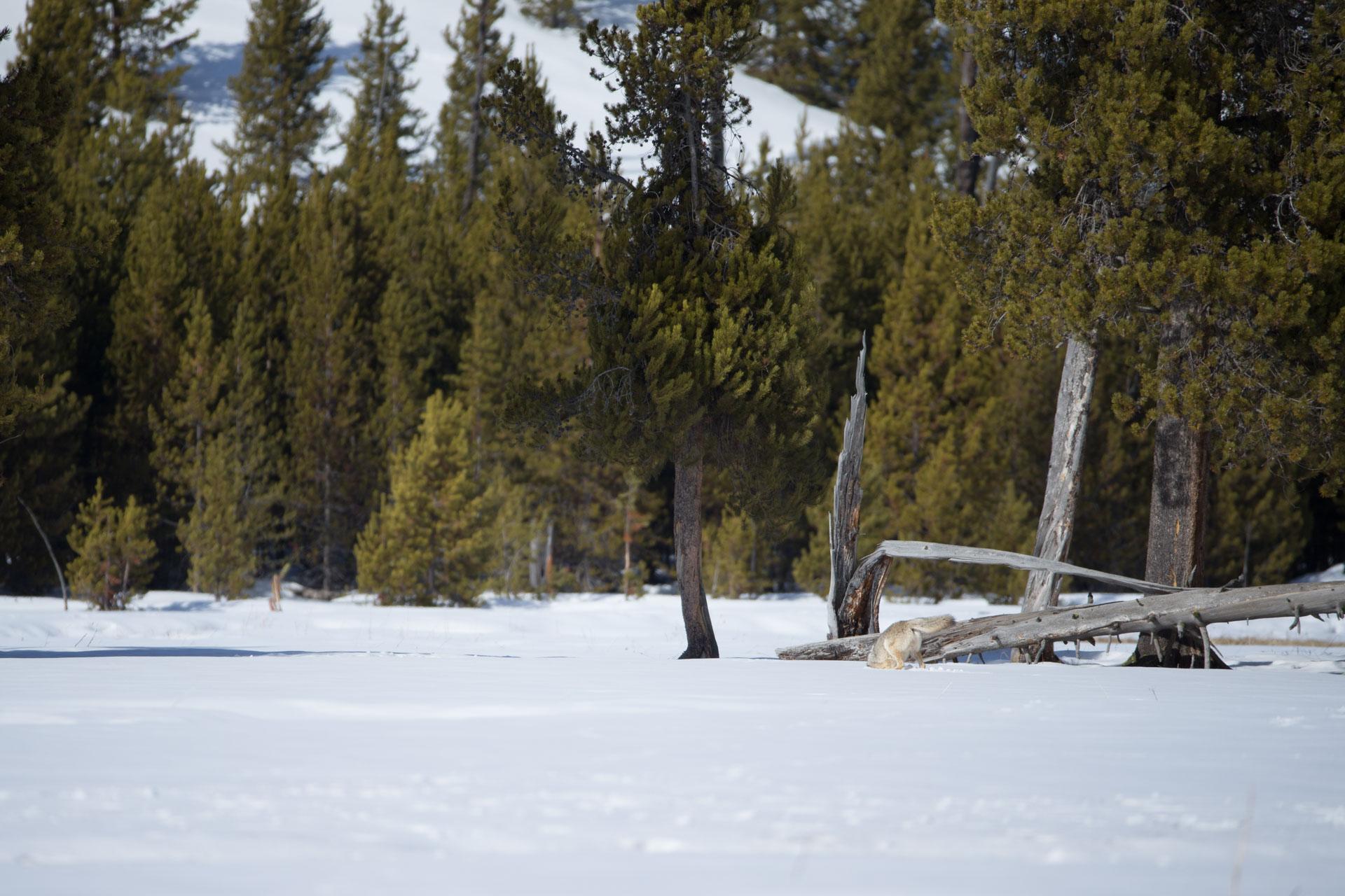 Yellowstone-7-2.jpg