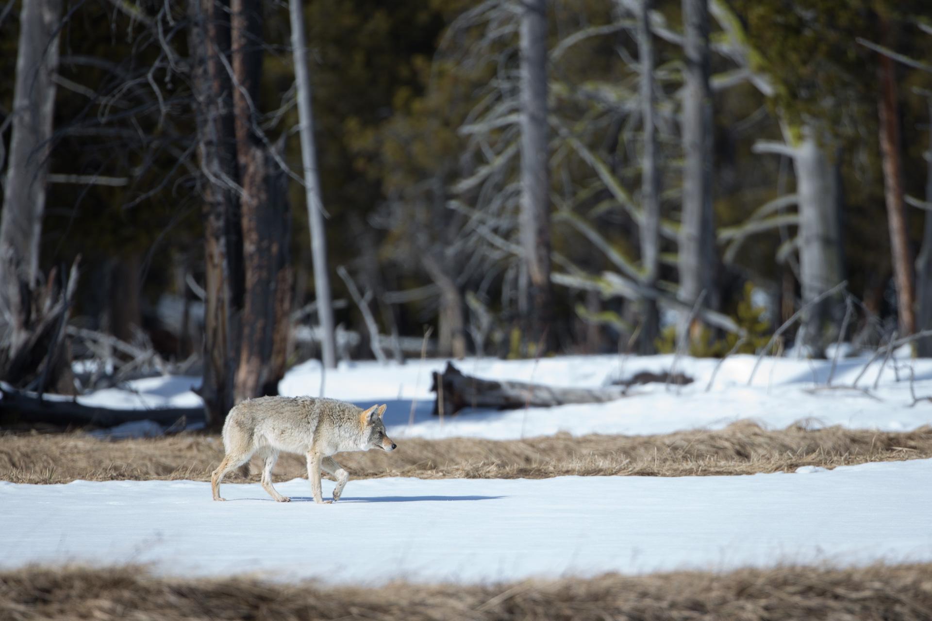 Yellowstone-6-2.jpg