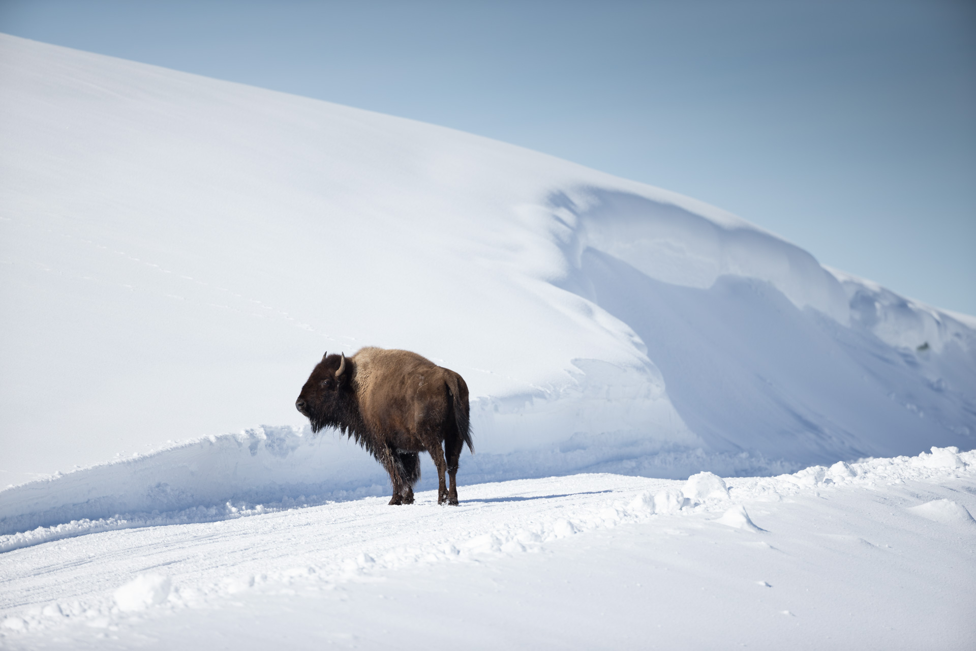 Yellowstone-4-2.jpg