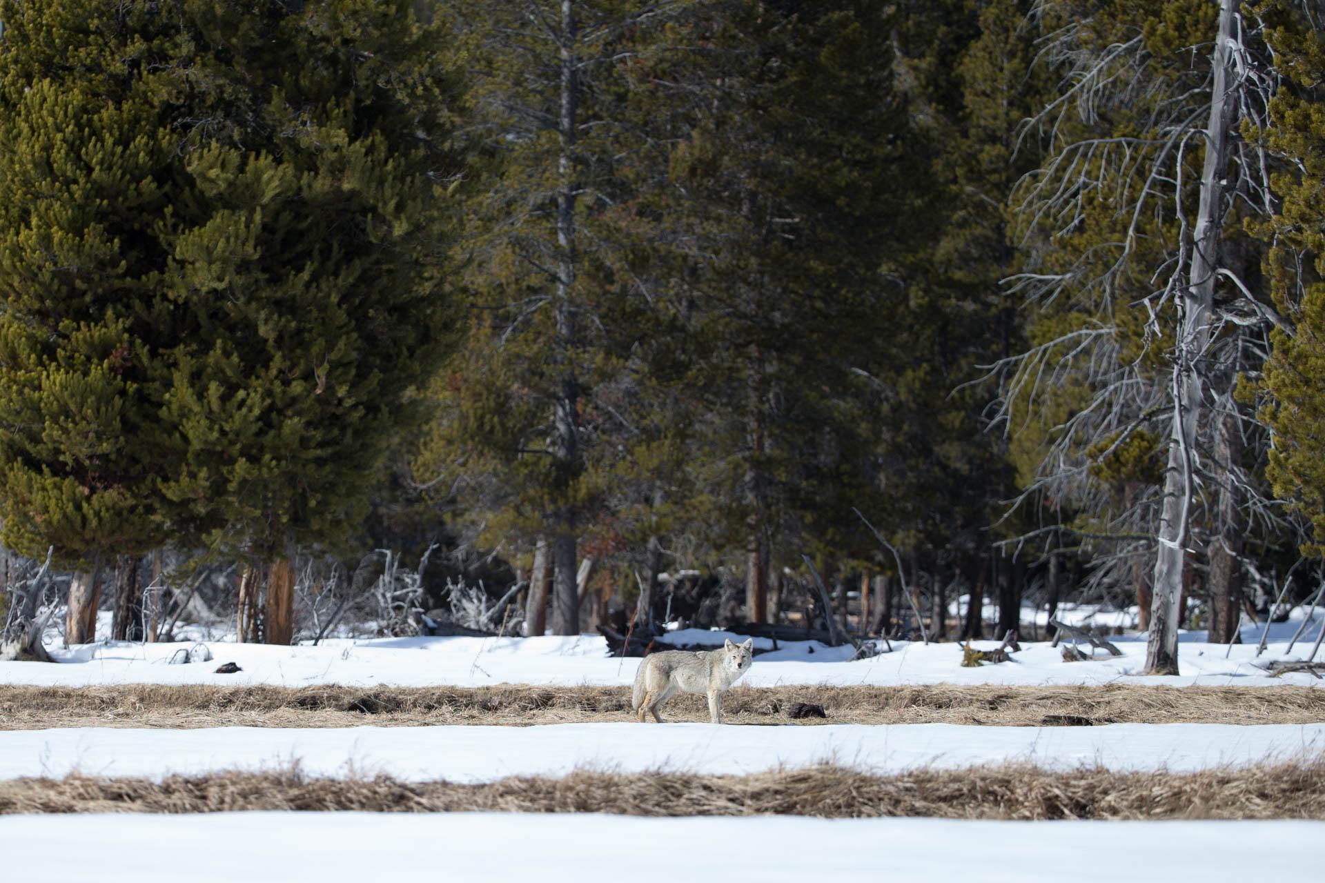 Yellowstone-5-2.jpg