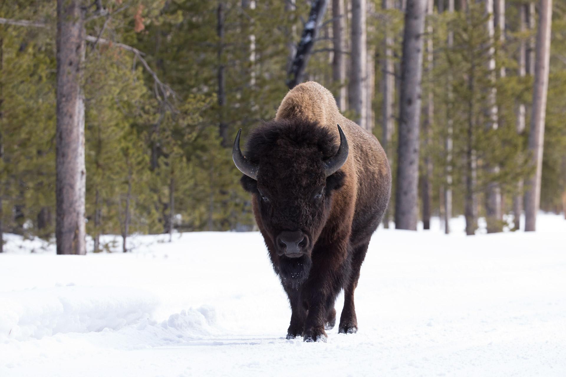 Yellowstone-3-2.jpg