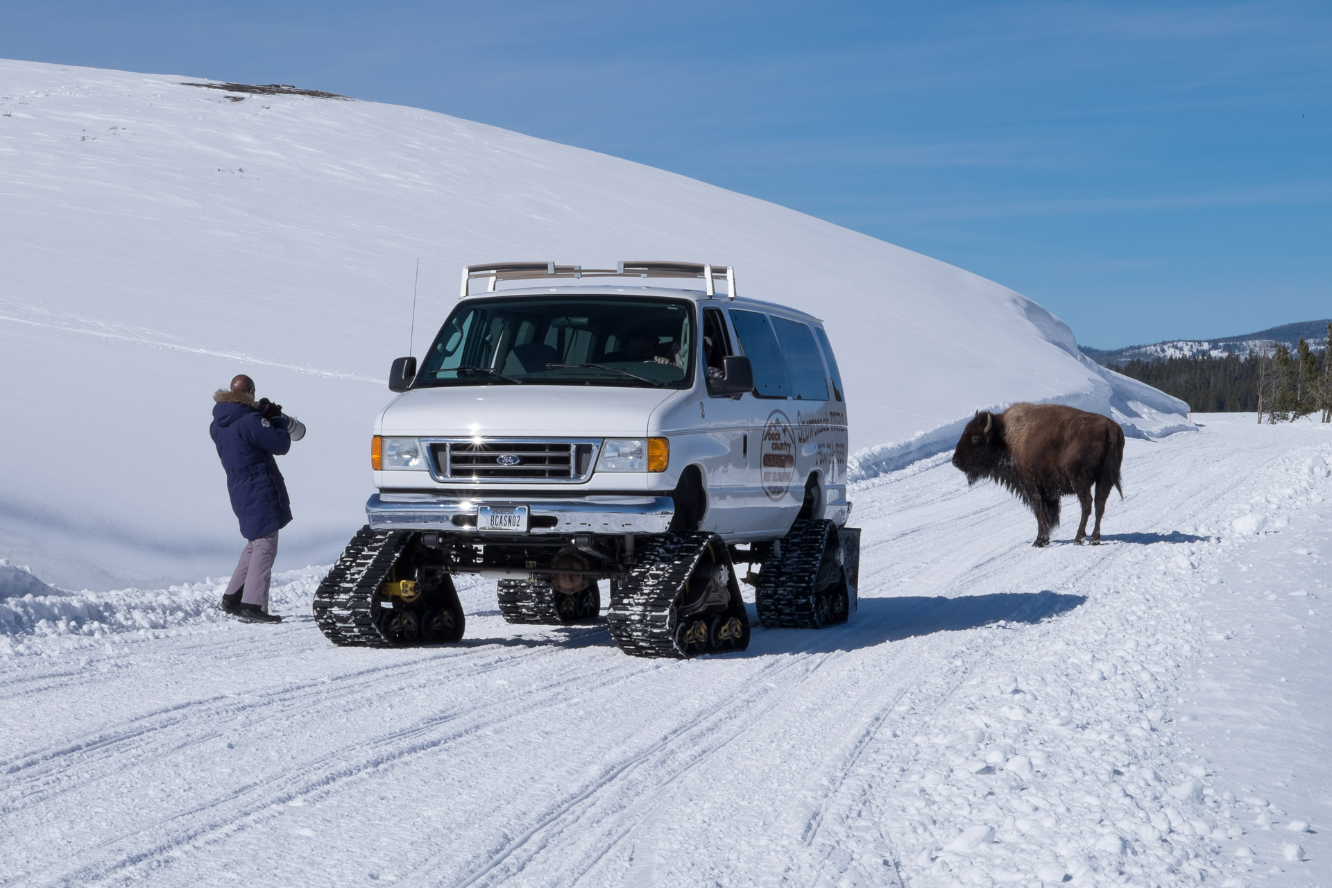 Playing 'Hide and Seek' with a Bison - Yellowstone Park