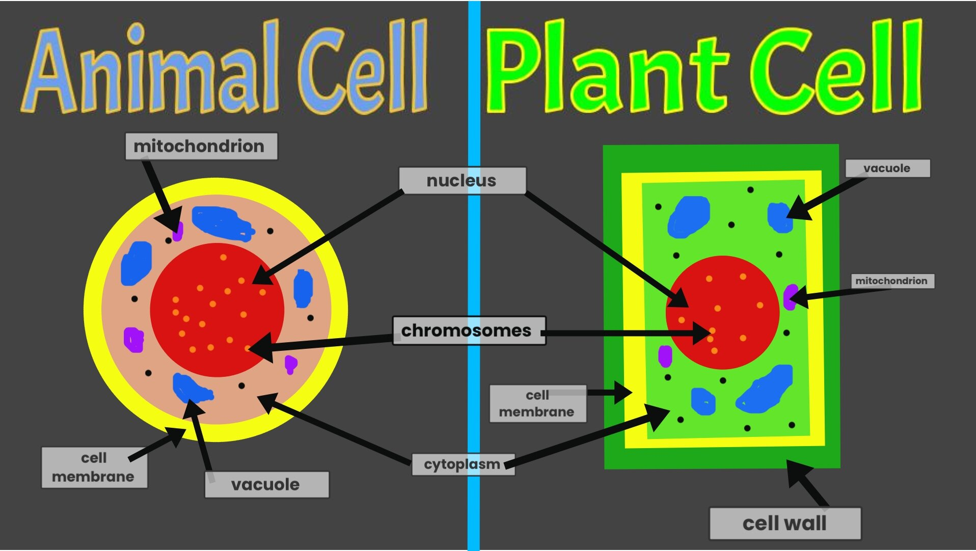 5th animal plant cell.jpg