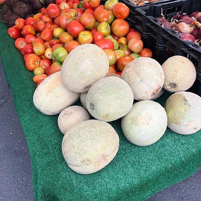 Cantaloupes now in season.