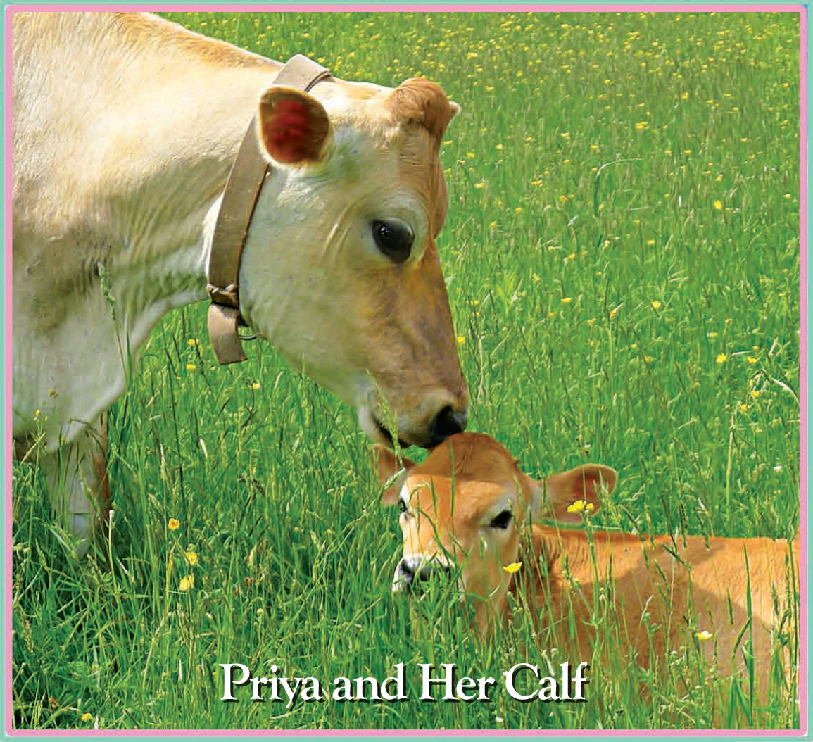 - Priya and her calf Hasita.The name Priya means very precious or pretty one, and Hasita means happy and free.