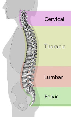 low-back-pain-treatment-nyc.png