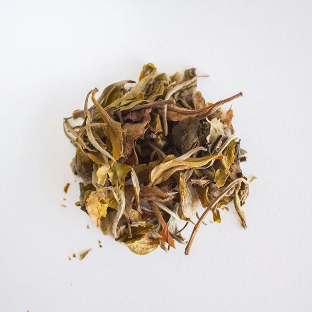Fall is almost here! What's your favorite tea this fall? . . . #fall #falliscoming #wakemeupwhenseptemberends #madeoftea #tea #tealover #tealovers #ilovetea #teaholic #timefortea #teatime #tealife #teaaddict #teaparty #teadrinker