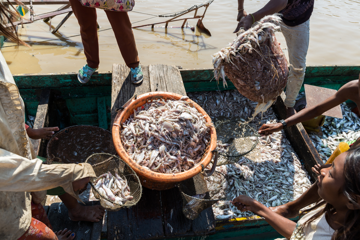 March 28, 2017 - Kampong Kleang, Cambodia. Small fish are sold at a floating fish market. © Nicolas Axelrod / Ruom