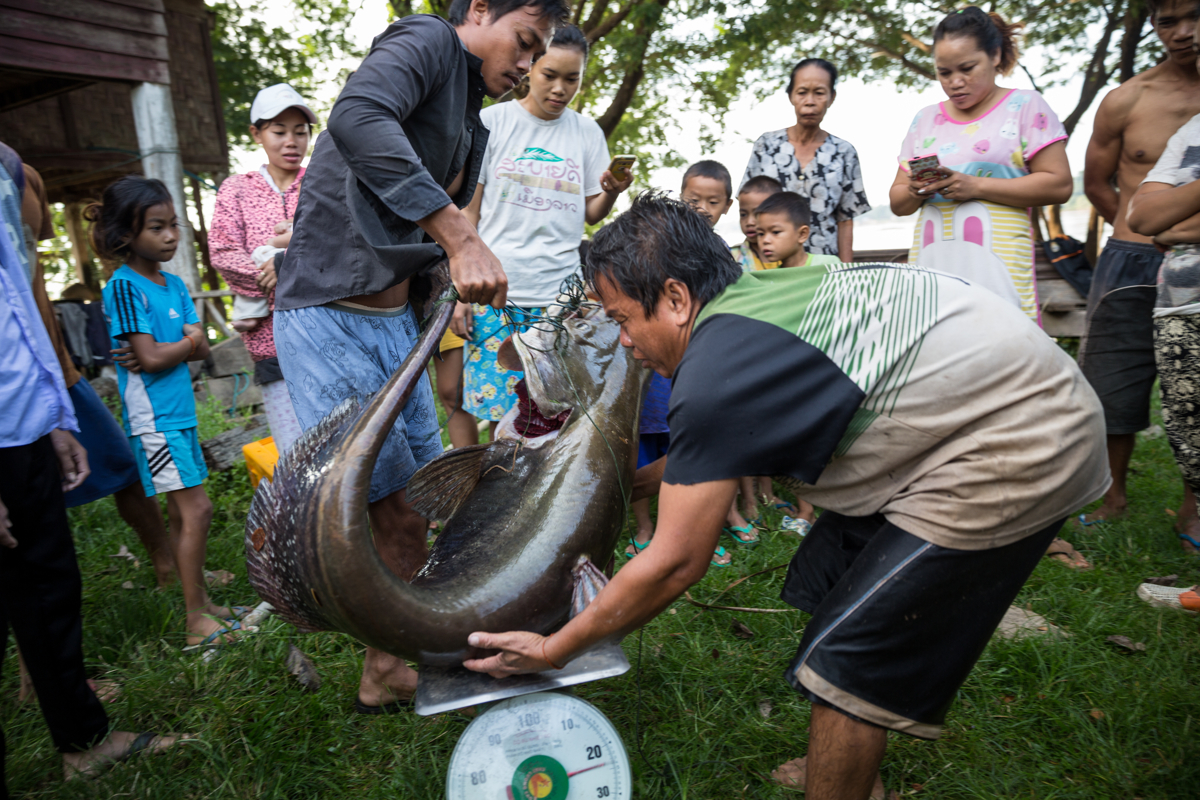 Oct. 14, 2016 - Don Sahong, Laos. Villagers gather to see a fisherman's catch that he brought in from his nets in the early morning. The Giant Mekong catfish is critically endangered species native to the Mekong Basin. © Nicolas Axelrod / Ruom