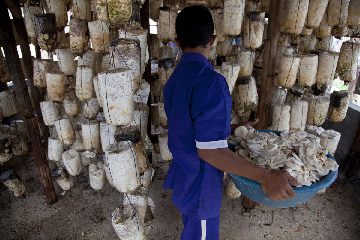 Mushroom cultivation ( youth from 15-18 yrs. old). Kandal Prison, Takmao. Cambodia