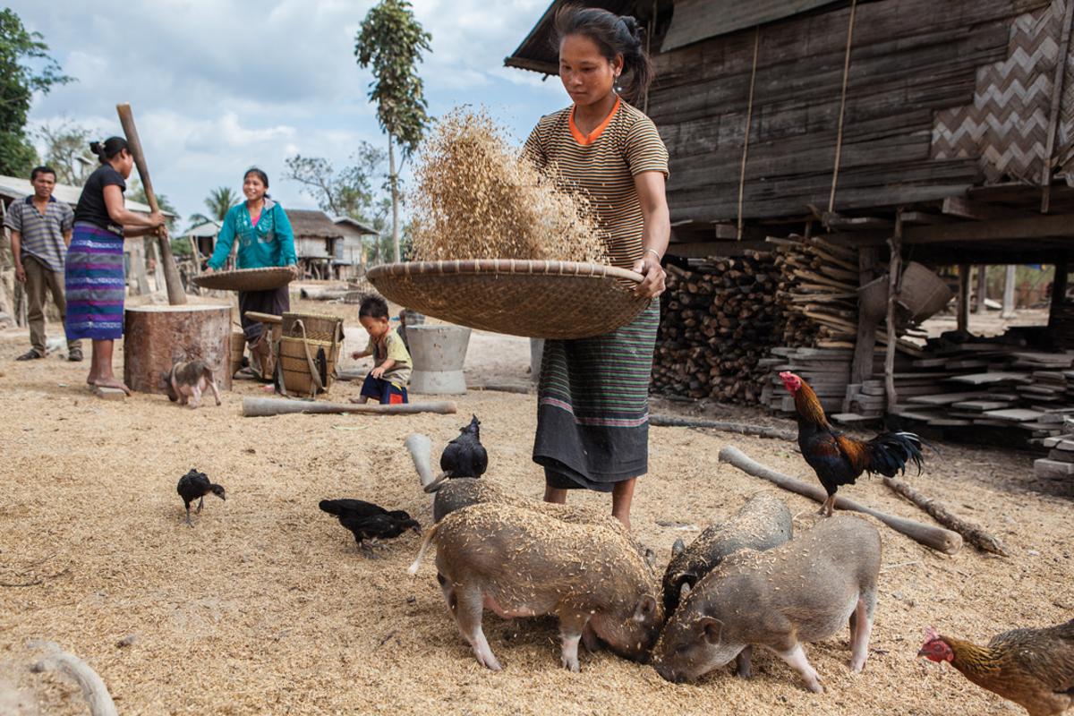Jan. 18, 2013 - Savannakhet, Laos. Villagers in Phone Marunee prepare rice flour. � Nicolas Axelrod for HI