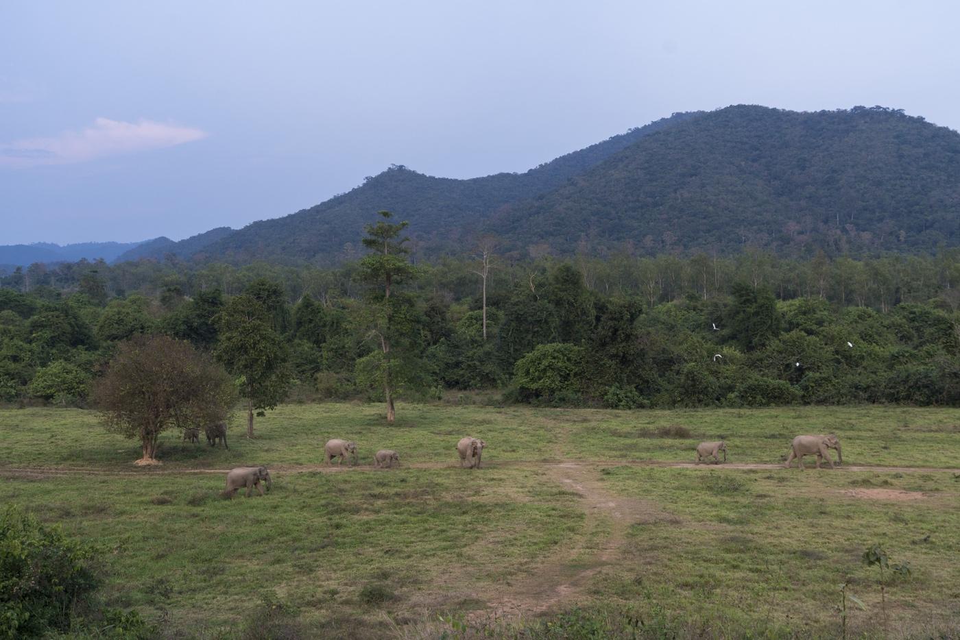 WWF Thailand, Kui Buri - Elephants