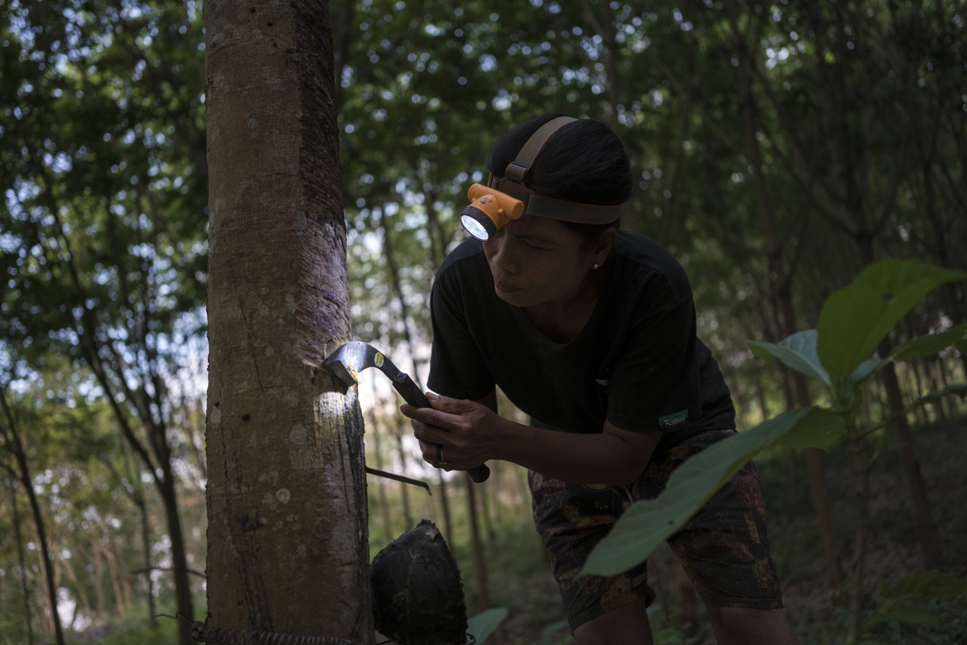 WWF Thailand, Kui Buri - Phanasit Phiboonwattanakorn