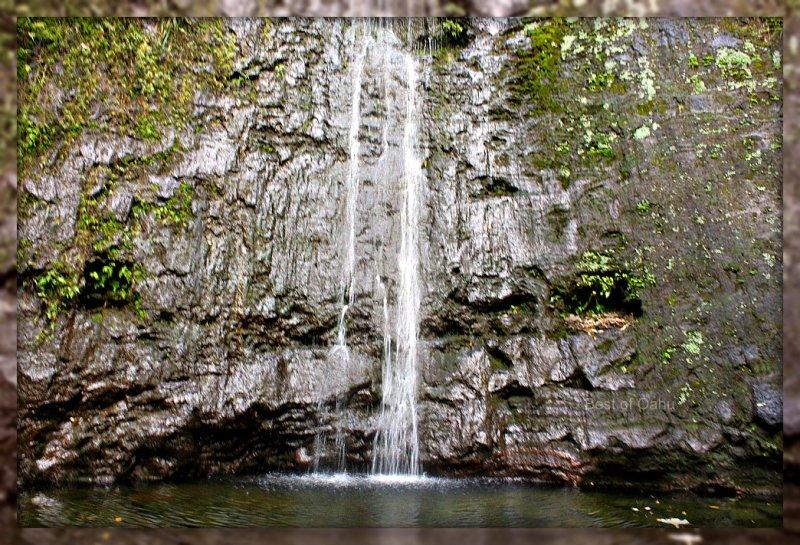 Manoa Falls from  Best of Oahu