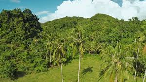 https://d2v9y0dukr6mq2.cloudfront.net/video/thumbnail/H3ymyCH1xiuhvo4rx/rainforest-and-jungle-palm-trees-philippines_hr0ya4rlg_thumbnail-full01.png