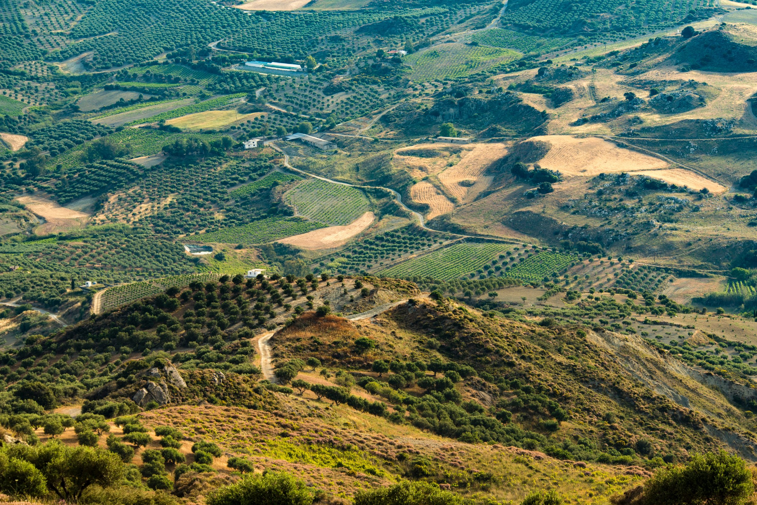 Landscape view of wine country