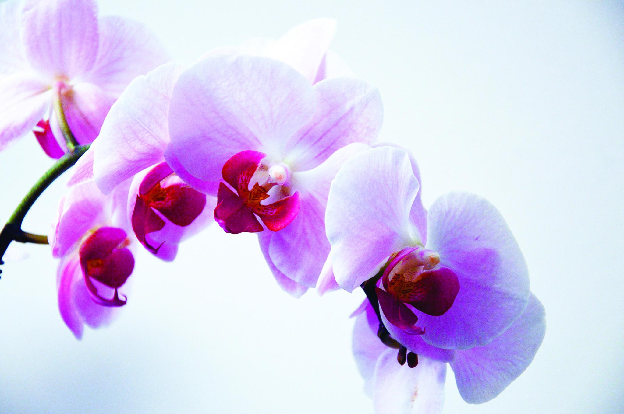 Orchid Spring Show - $5 EntruUnder 16 Free