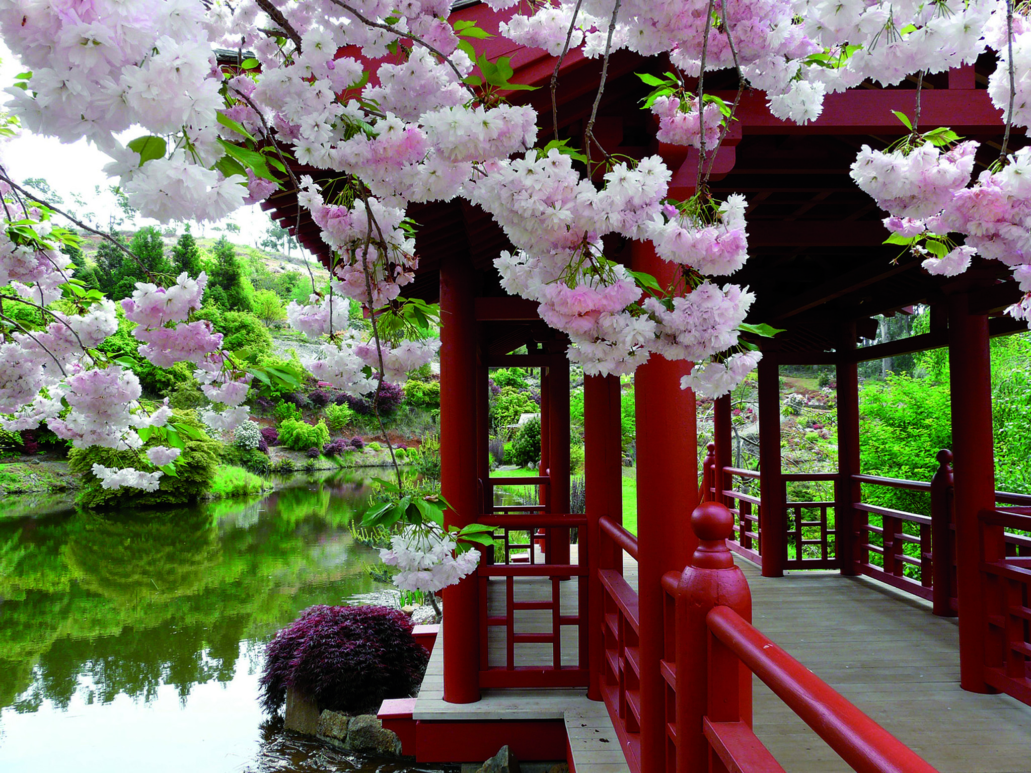 Cherry Blossom Festival - Adult $15 Conc. $12Children Freeemuvalleyrhodo.comEmailPh: 03 6433 1805