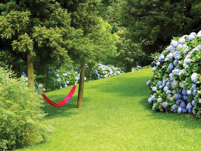Helen's Garden Tour - $8 per personPh: 03 6431 2572