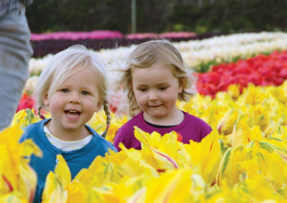 Table Cape Tulip Farm - Adults $12 Conc. $1016 yrs and under Freetablecapetulipfarm.com.auPh: 03 6442 2012