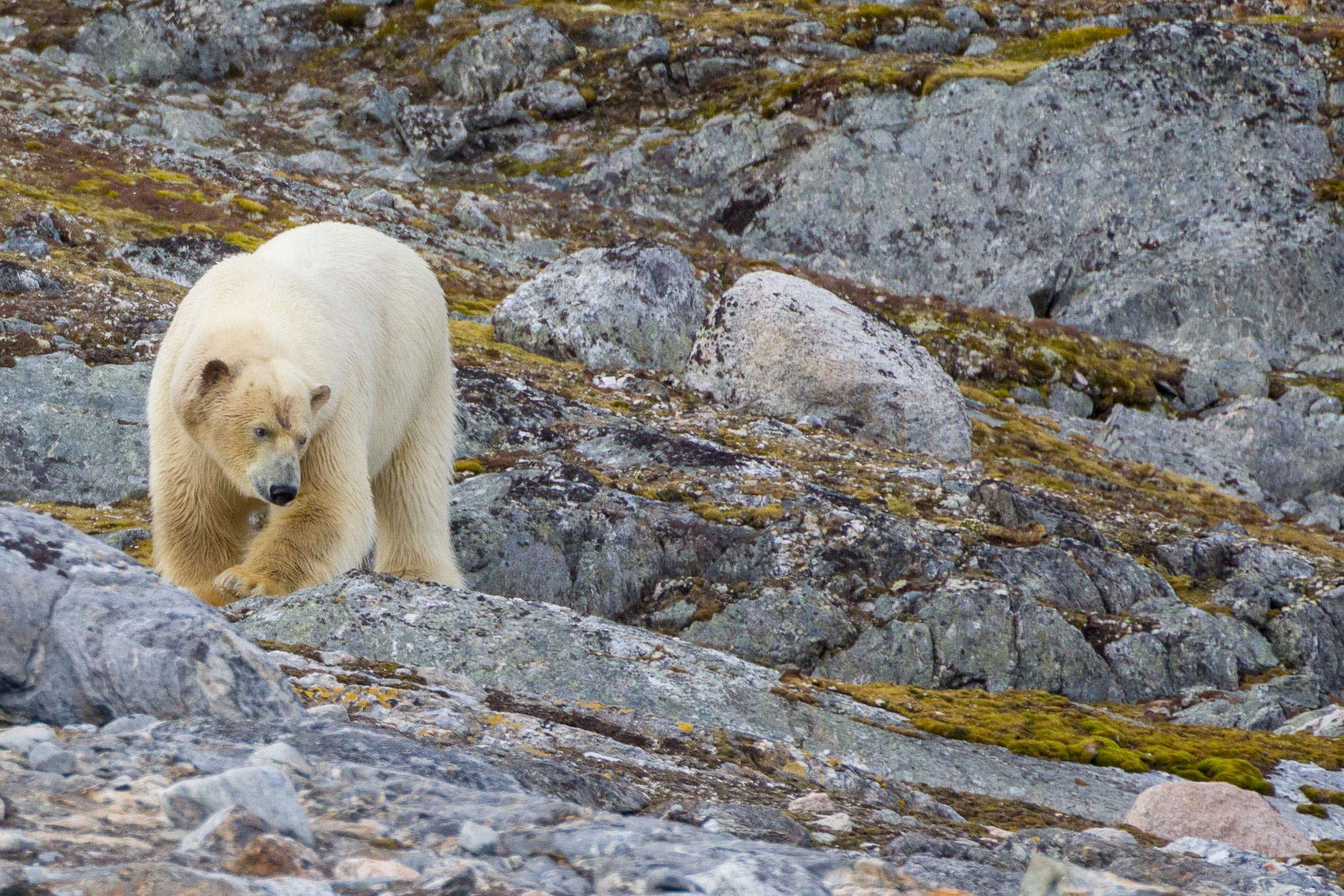Vancoillie - Spitsbergen - 2018-07-04_98A3683.jpg