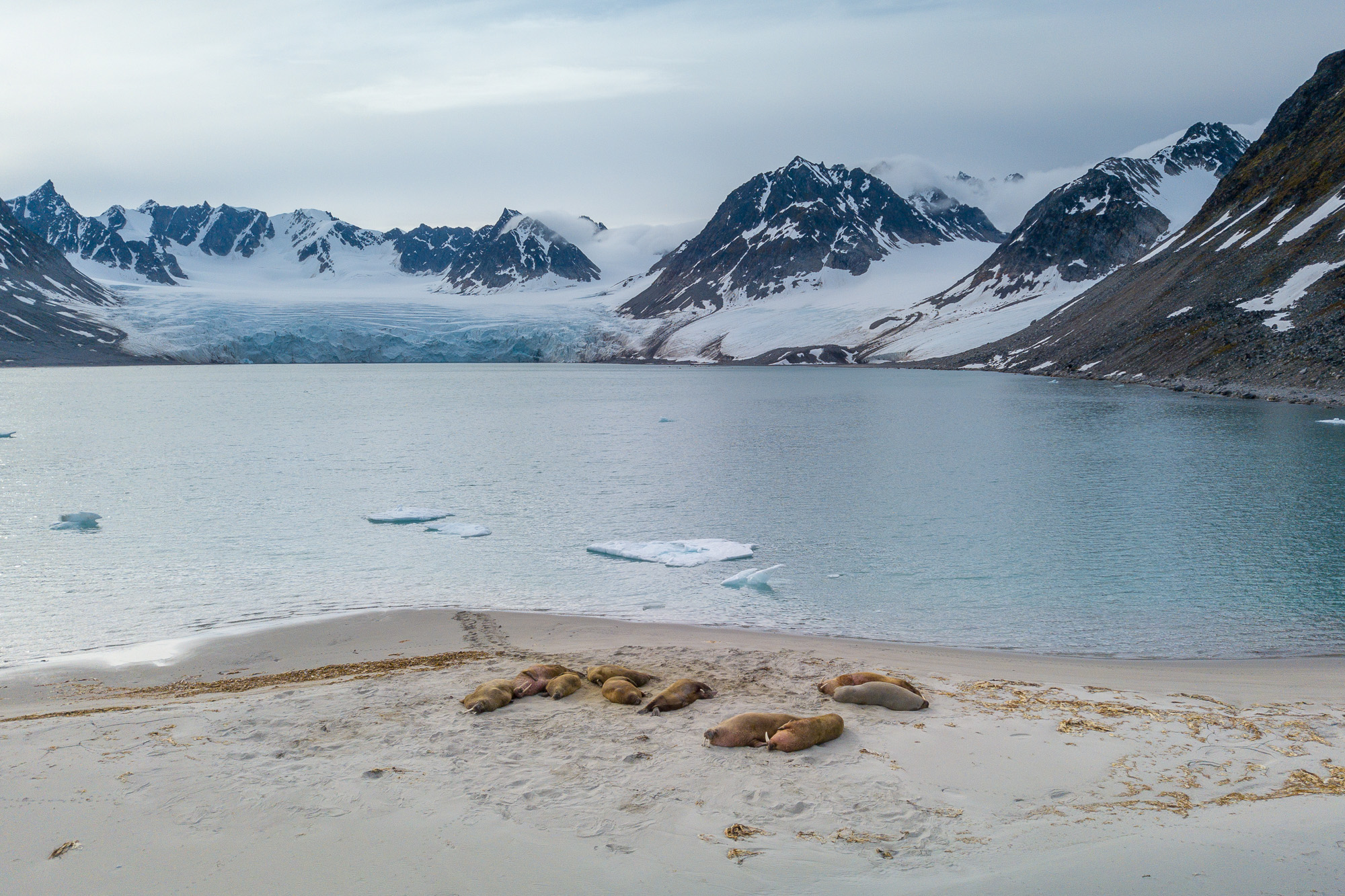 Vancoillie - Spitsbergen - 2018-07-04DJI_0059.jpg