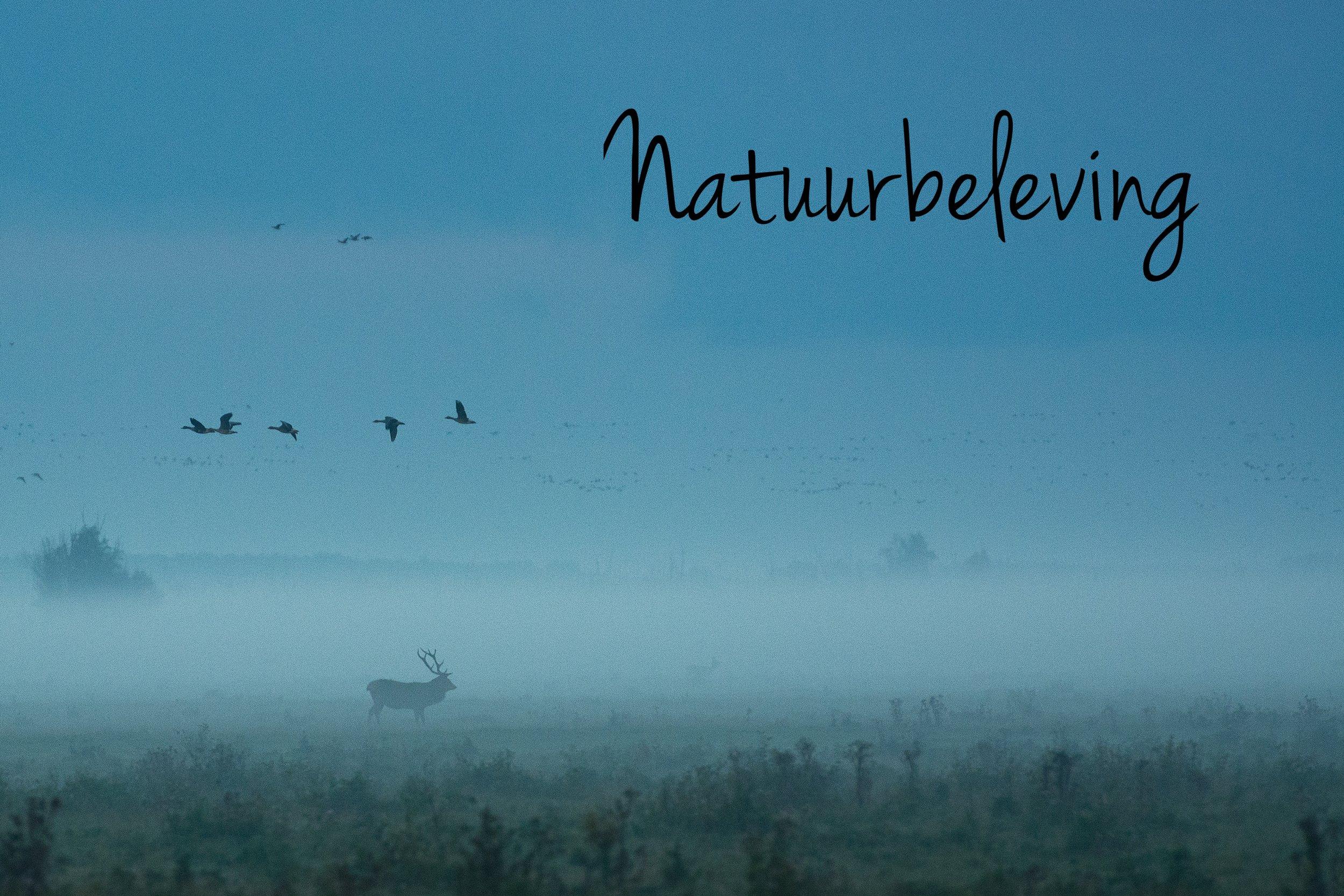 Van arenden en zwermen trekvogels in de lucht, zeehonden, otters, dolfijnen en haaien in het water, en burlende herten op het land: wij kiezen de herfst.