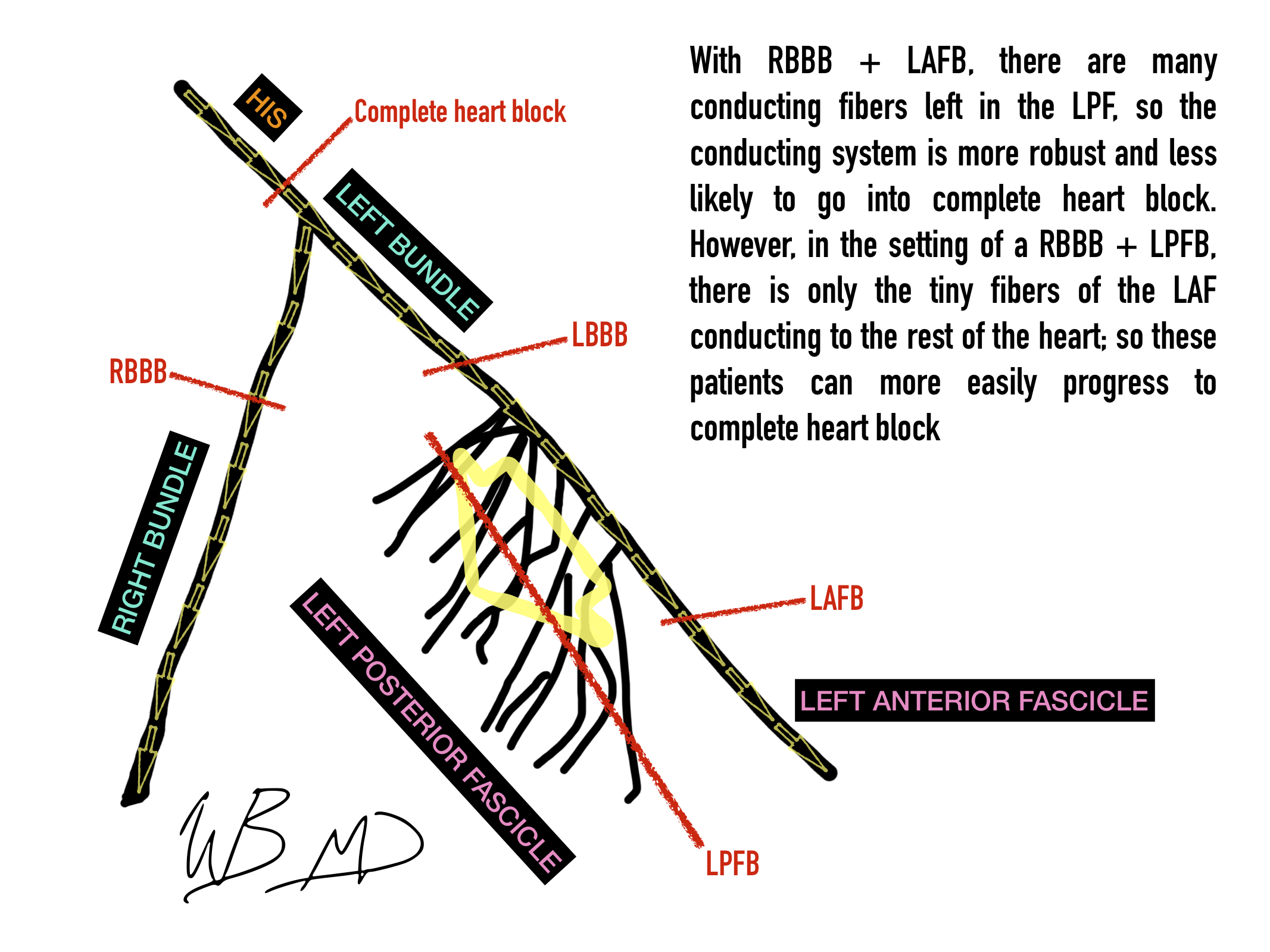 electrical-conducting-system-of-the-heart-text.jpg