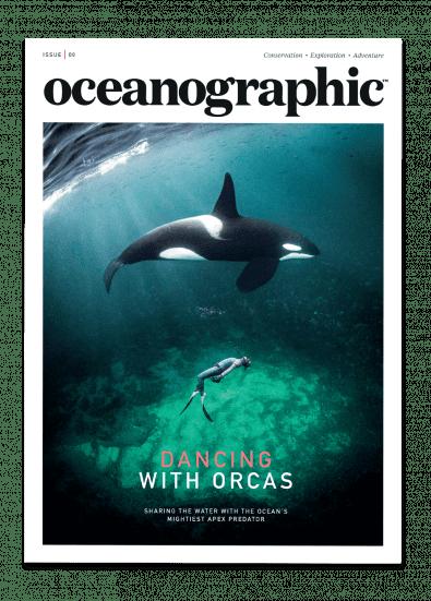 Oceanographic, Dancing With Orcas  £10.00,  Buy now