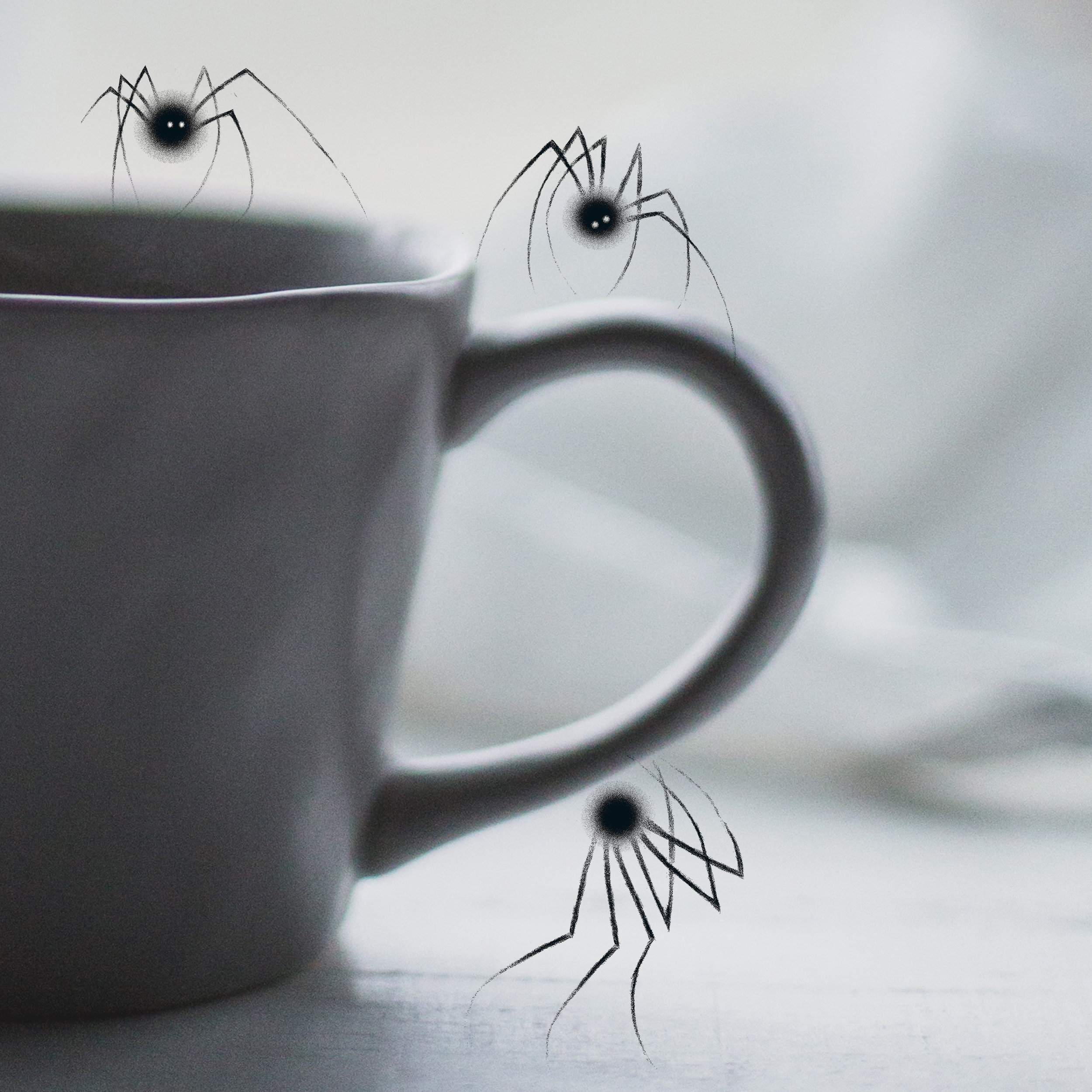 Petites araignées