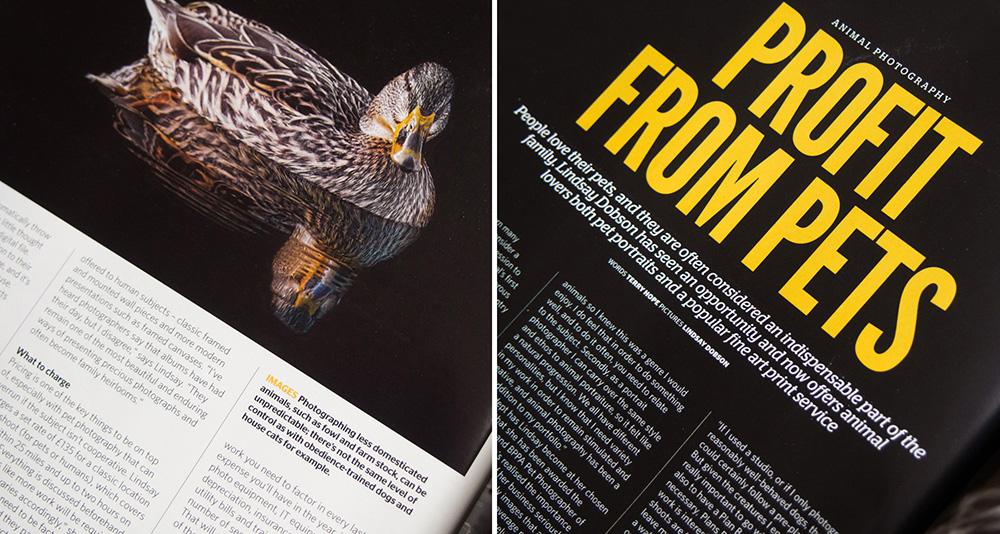 photo professional magazine feb 2014 - Pet and animal photography on location has its constraints and at times it can be frustrating. In this article for Photo Professional magazine I share my tips for getting the best out of your pet portrait photo sessions.