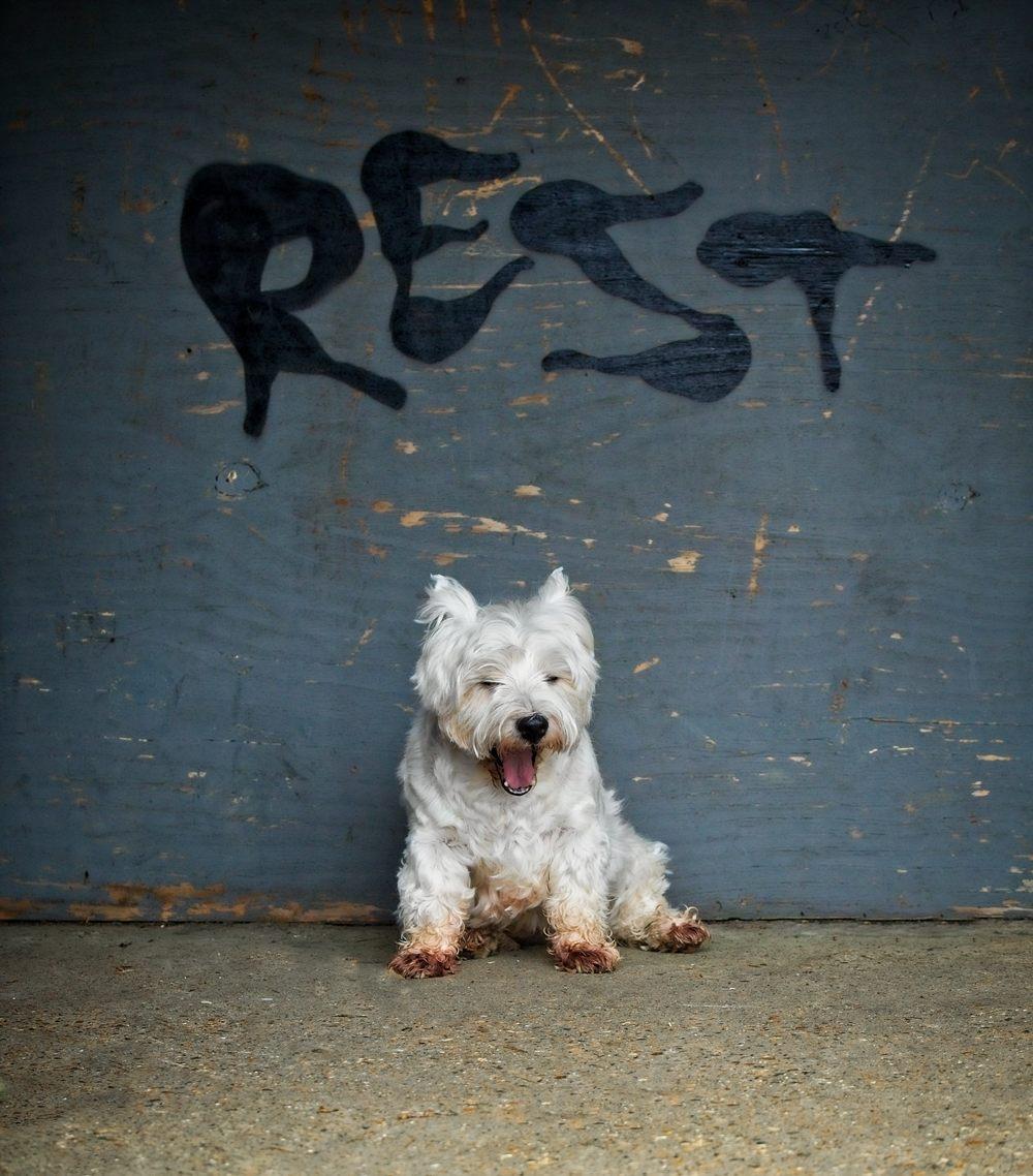 creative_dog_photography_sussex_.jpg