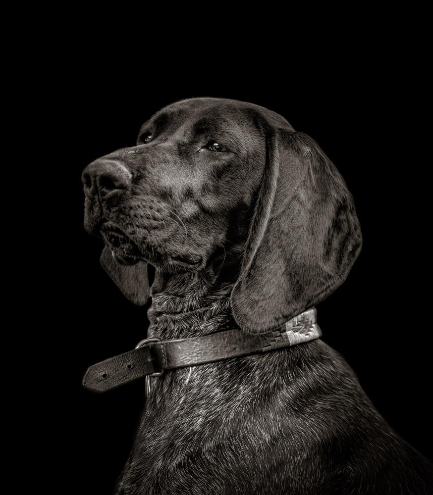 Dog_Photography_Brighton_Horsham_Chichester_Worthing.jpg