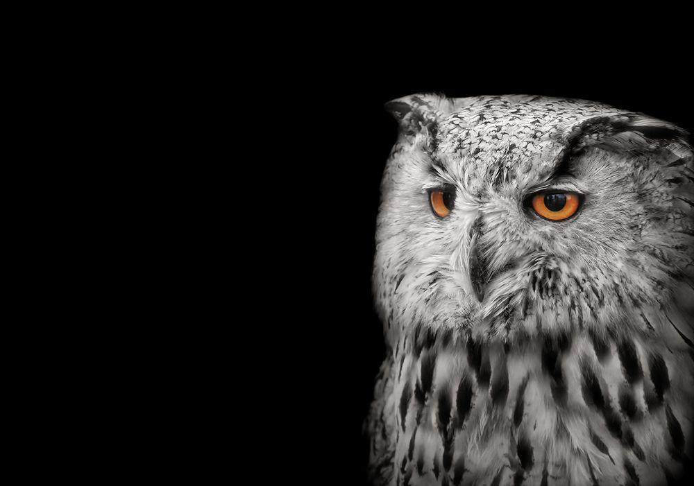 Fine_Art_Pet_Photography_Sussex_Surrey_1.jpg