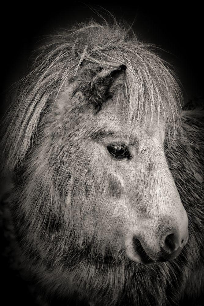 Fine_Art_Pet_Photography_Sussex_Surrey_15.jpg