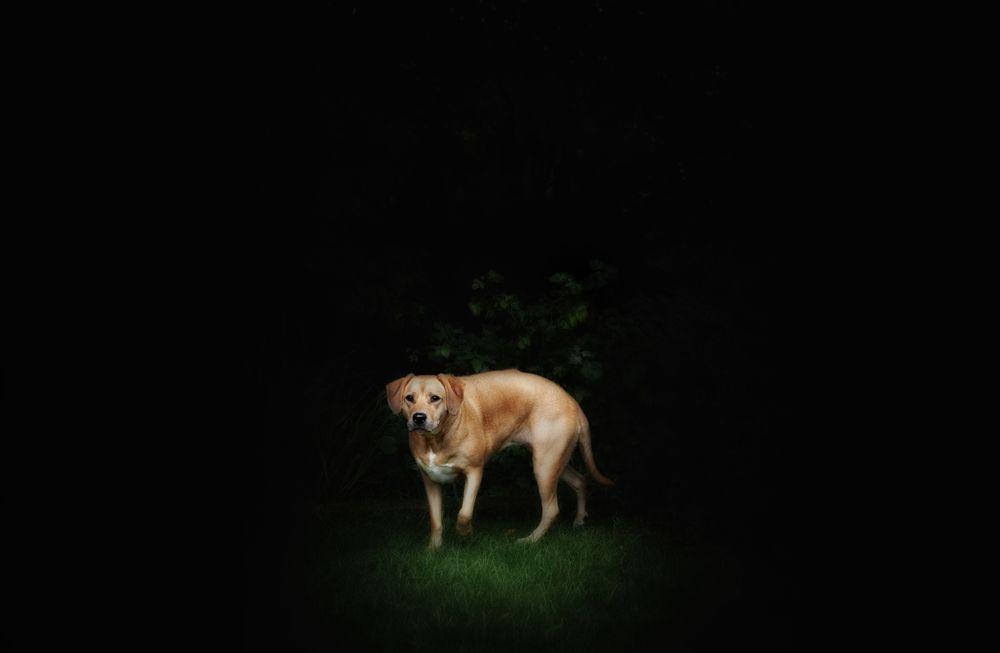 Fine_Art_Pet_Photography_Sussex_Surrey_17.jpg