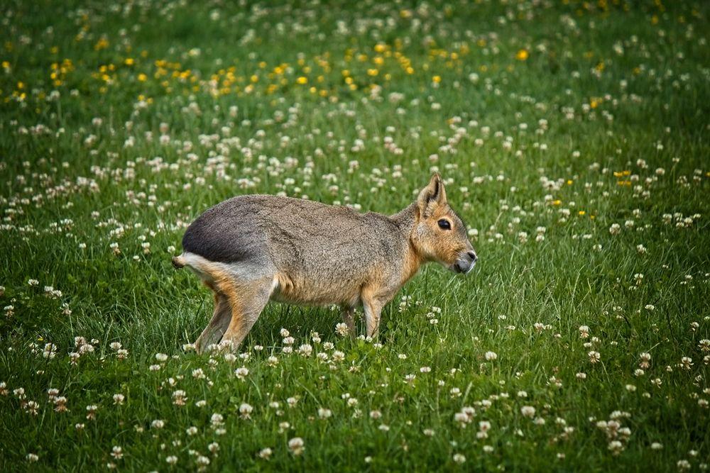 Location_Pet_Photography_Sussex_Surrey_13.jpg