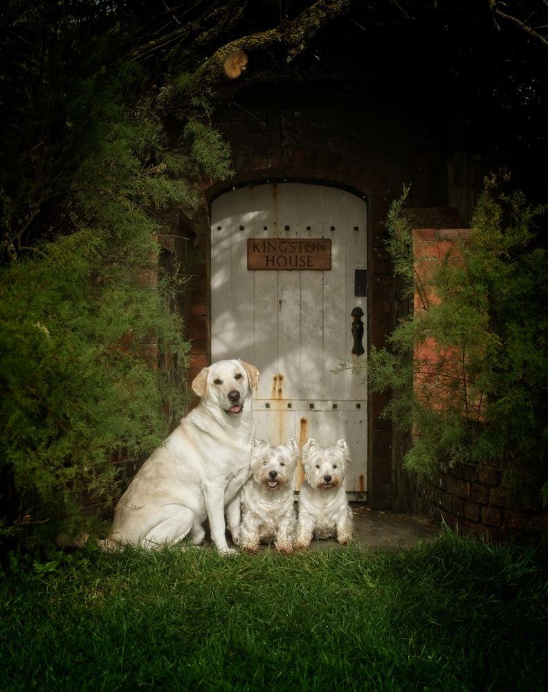 Location_Pet_Photography_Sussex_Surrey_40.jpg